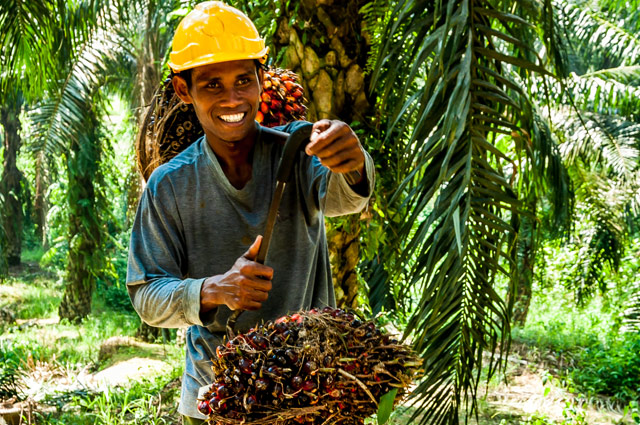 sarawak oil palms berhad A malaysian palm oil company has suspended forest clearing on a small  this  concession belongs to sarawak oil palms bhd, not jaya tiasa.